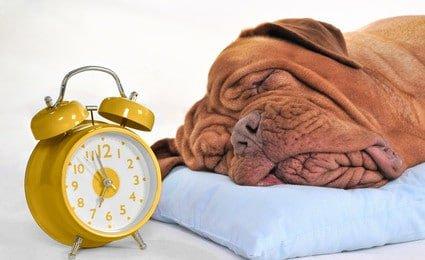 Hundehalterhaftpflicht Pflicht