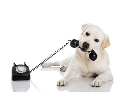 Hundeversicherung Blog – Kontakt