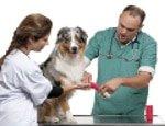 Operation beim Hund