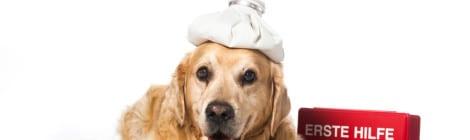 Hunde-Op Versicherung