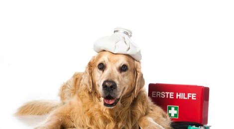 Hunde-Op Versicherung Ratgeber