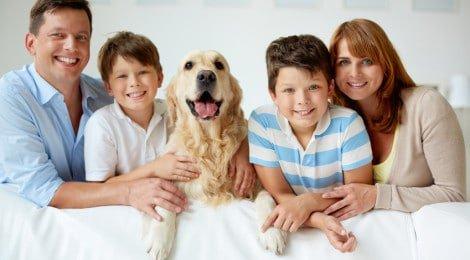 Hundekrankenversicherung Ratgeber
