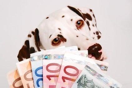 Hundeversicherung Vergleich