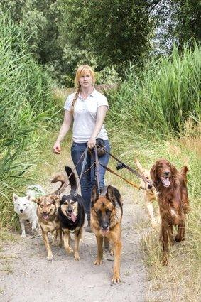 Hundesitter-Versicherung