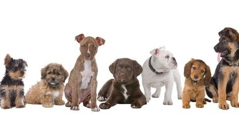 Ein Bandscheibenvorfall beim Hund kann jeden treffen!
