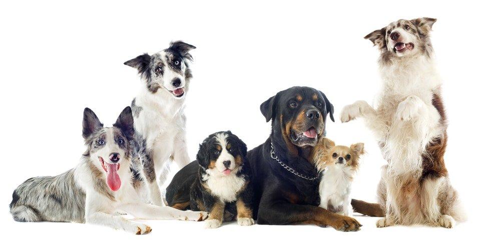 Hundehaftpflichtversicherung für alle Rassen