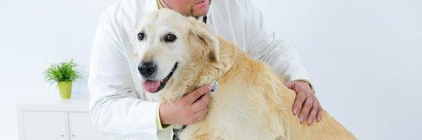 Hundekrankenversicherung vergleichen