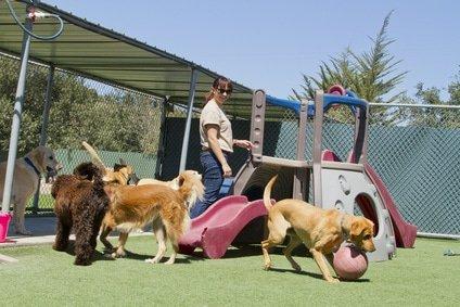 Hundeversicherung für Hundeschule / Hundepension