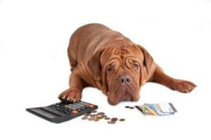 Hundesteuer Berlin Kosten