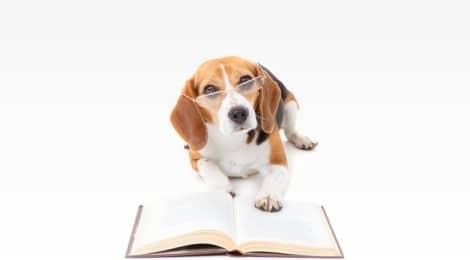 Hundesteuer Berlin – Hunde Anmeldung, Kosten, Tipps, Checkliste