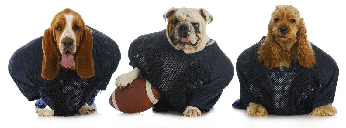 Hundeversicherung Pflicht oder Kür?