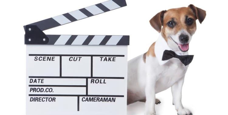 Hundeversicherung Video