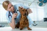 Tierarztbehandlungen in der Hundekrankenversicherung
