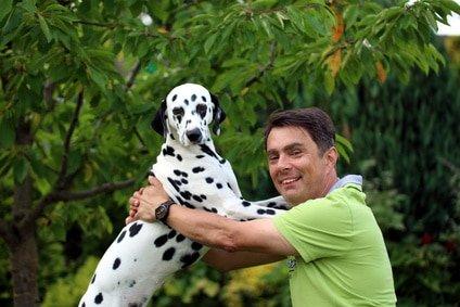 Tierarztkosten Dalmatiner