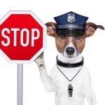 Hundehaftpflicht Angebot
