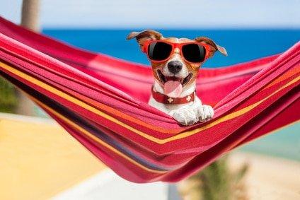 Urlaub mit Hund in Spanien