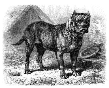 Hundesteuer in früheren Zeiten