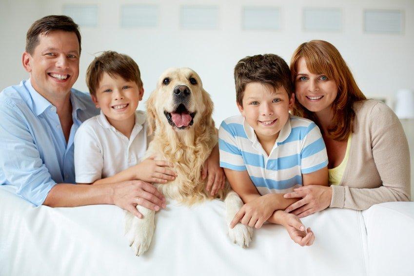 Hundekrankenversicherung sinnvoll