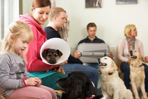 Hundeversicherung für Tierarztkosten