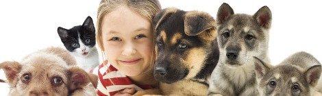 Hundeversicherung für Welpen