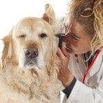 Hundekrankenversicherung für Golden Retriever
