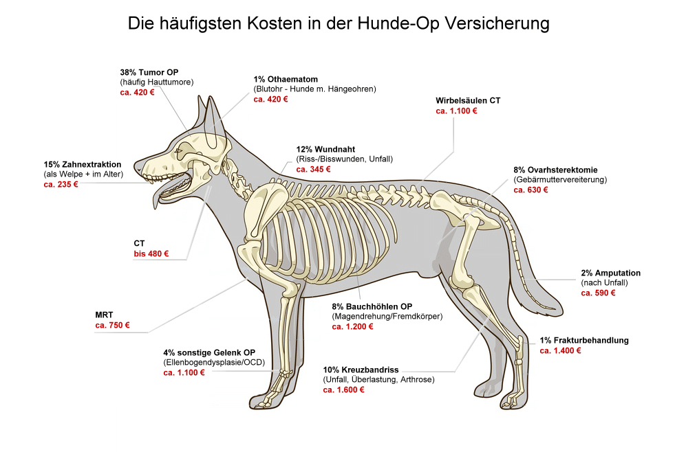 Diehäufigsten Operationen beim Hund