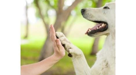 Hundeversicherung Vergleich 100% Schutz ohne Kompromiss