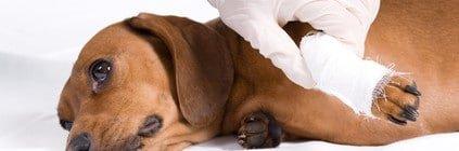 Beißerei unter Hunden