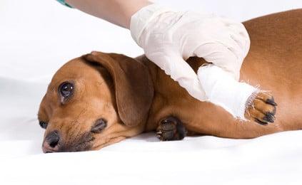 Beißerei unter Hunden - wer bezahlt die Krankheitskosten?