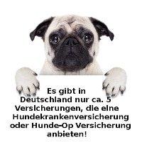 Hundekrankenversicherung Angebote