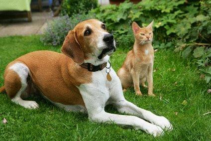 Tierarztkosten Hund