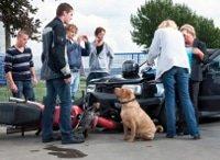Hunde-Op-Versicherung für Unfälle