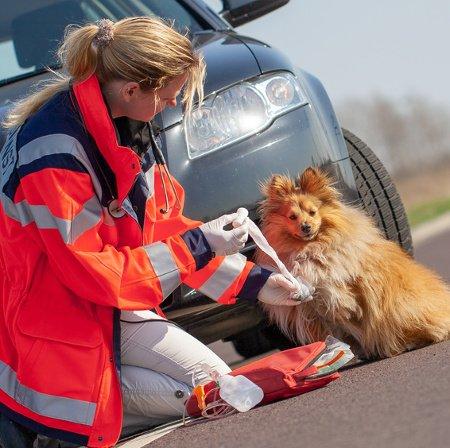 Hundeopversicherung für Unfälle