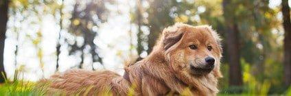 Tierarztkosten ELO