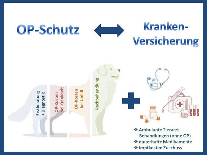 Hundekrankenversicherung oder Hunde-OP Versicherung