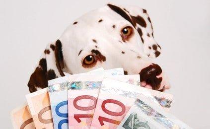 Günstige Hundehaftpflicht: Testsieger mit Top Leistungen