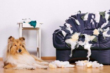 Hundehaftpflicht Test Stiftung Warentest