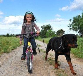 Hundehaftpflicht für gefährliche Hunde - Die Vorurteile