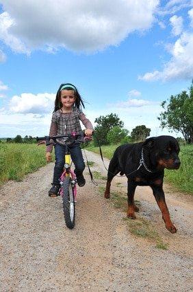 fillette a vélo et son rottweiler