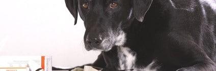 Lohnt sich eine Hundekrankenversicherung?