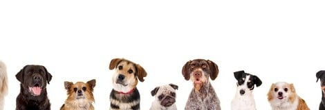 Die Kastration beim Hund  - und schwerwiegende Folgen!