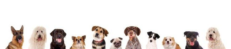 Reihe verschiedener Hundekpfe