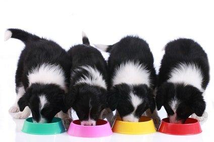 Ist Ihr Hundefutter wirklich hochwertig?