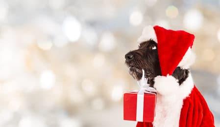 ein hund als weihnachtsgeschenk nein danke. Black Bedroom Furniture Sets. Home Design Ideas
