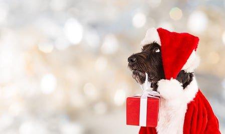 Hund als Weihnachtsgeschenk