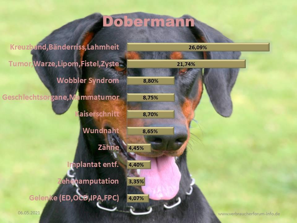 Statistik über die häufigsten Operationen beim Dobermann
