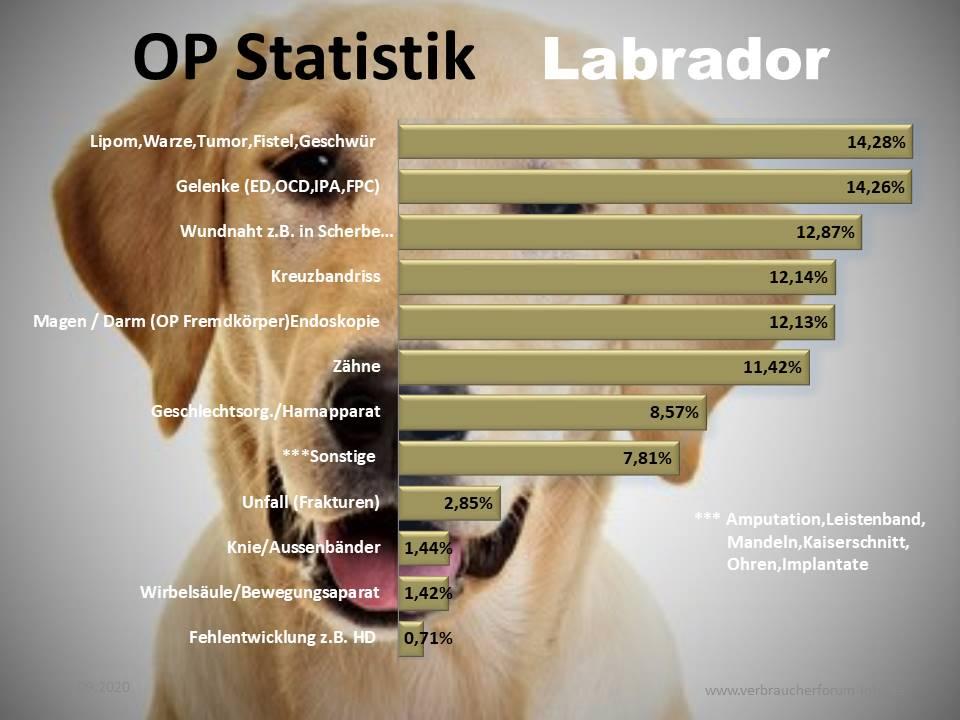 Operationen und Krankheiten Statistik beim Labrador