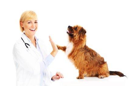 Hunde-OP Versicherung mit Kastration