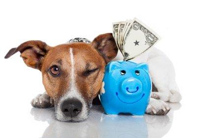 Hundeversicherung für Jack Russell Terrier