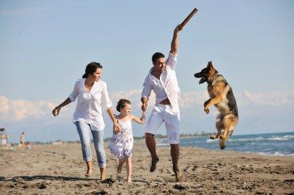 Hundeversicherung für Schäferhund